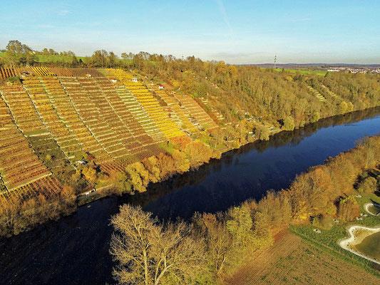 2021: Weinberge am Neckar bei Marbach