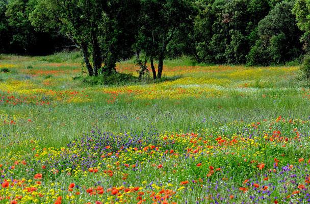 2010: Frühsommerliche Blumenwiese in Nordspanien