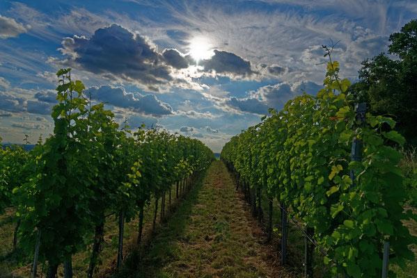 2018: Der Wein und die Sonne bei der Burg Beilstein