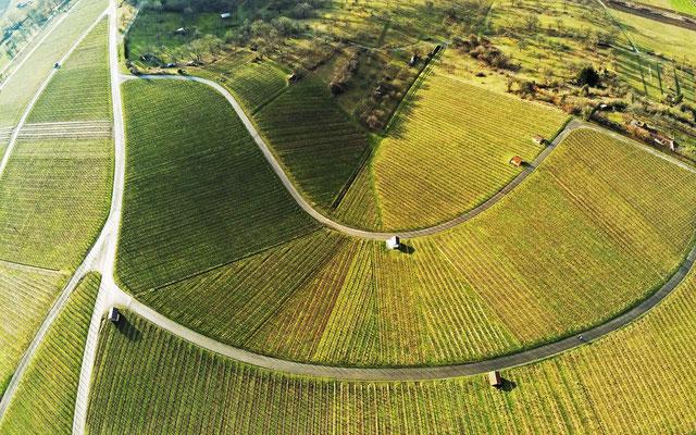 2019: Drohnenbild am Anfang: Weinberge bei Burg Lichtenberg