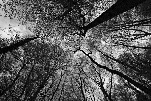2020: Bäume im Winter