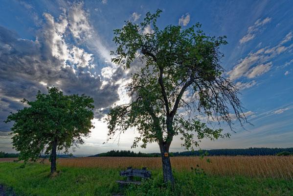 2020: Abendstimmung im Schwäbischen Wald