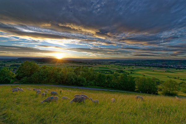 2020: Schafe am Abend an der Schwäbischen Alb