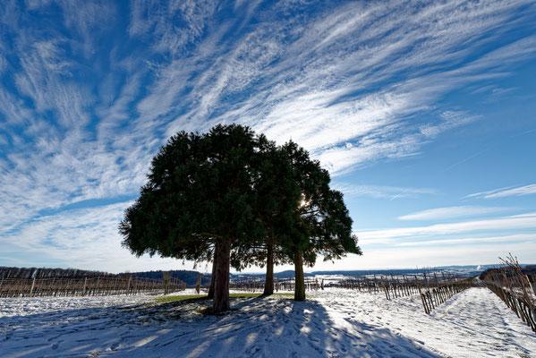 2021: Bäume im Winter