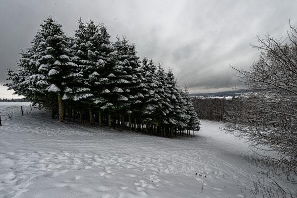 Schwäbischer Wald im Winter 2021 beim Schneeschuhwandern