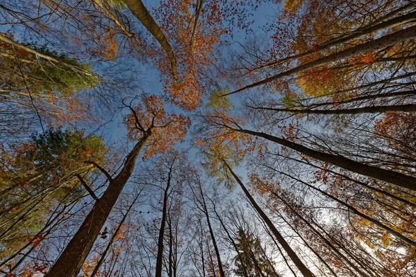 2020: Wanderung im Schwäbischen Wald1