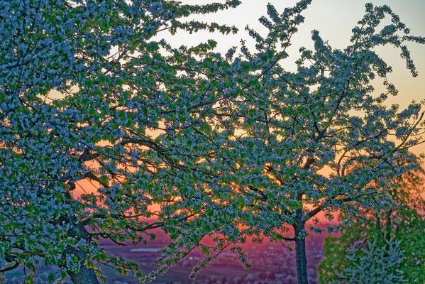 2020: Sonnenuntergang im Frühjahr bei der Burg Lichtenberg