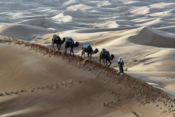 2008: Zurück ins Camp (Sahara, Marokko)