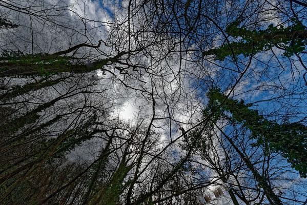 2021: Bäume im Frühling