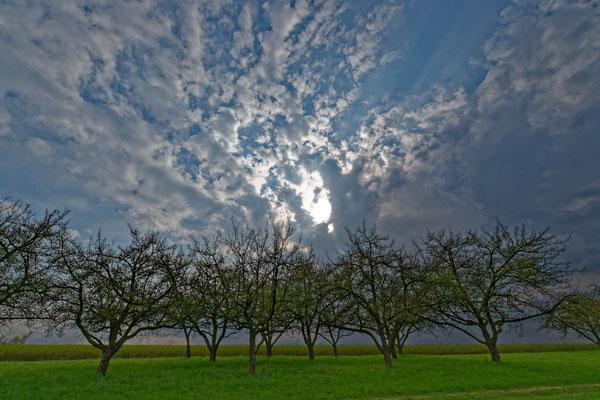 2020: Bäume im Frühjahr bei Erdmannhausen
