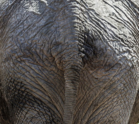 2016: Elefant von hinten im Tarangire Nationalpark (Tansania)