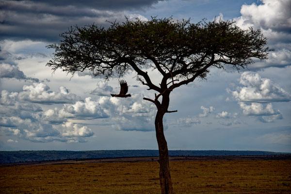 2019: Abendlicher Flug in der Masai Mara