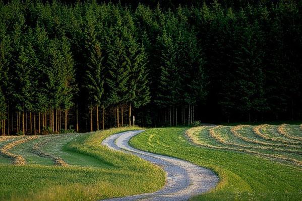 1998: Weg zum Wald in Bayern
