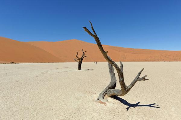 2014: 'Death Vlei' in der Namib-Wüste, Namibia