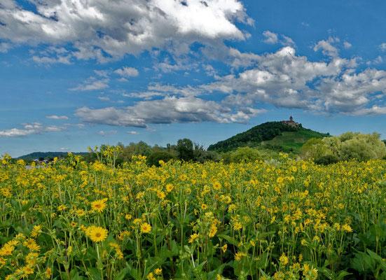2020: Blumenwiese vor Schloß Lichtenberg (Oberstenfeld)