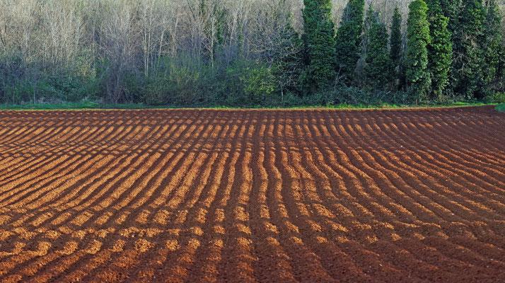 2015: Frischer Acker auf Istrien