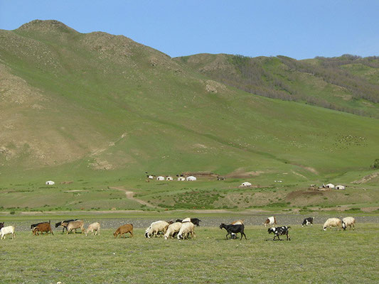 Schaf- und Ziegenherde, aufgenommen von ritsch-ratsch