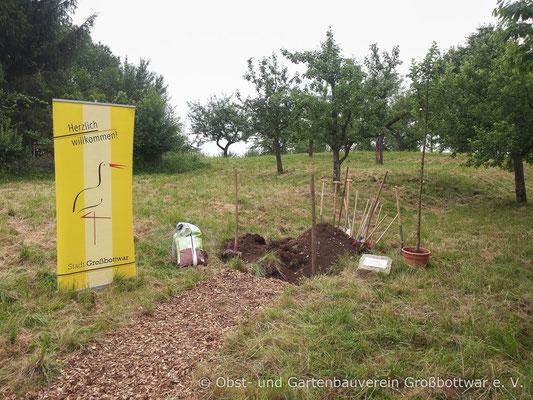 Alles ist für die Pflanzung des Jahrgangsbaumes vorbereitet.