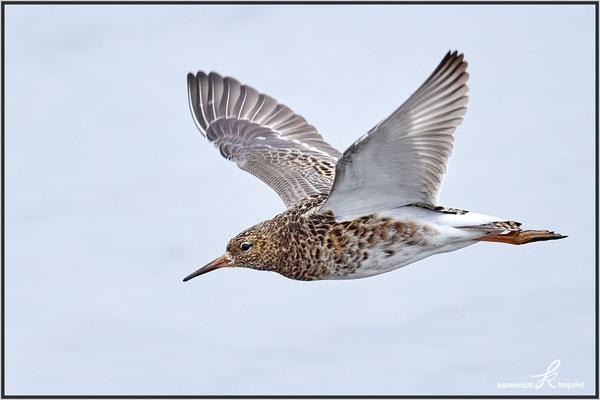 Flügelspannweite ca. 55 cm