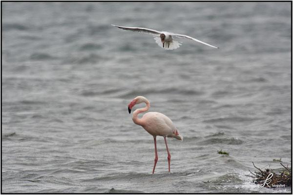 Rosa Flamingo - Größe ca. 120 - 145 cm