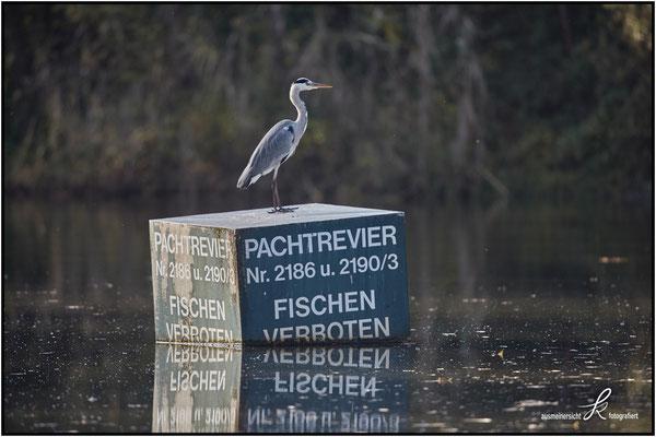 Fischreiher - Vögel können nicht lesen ...