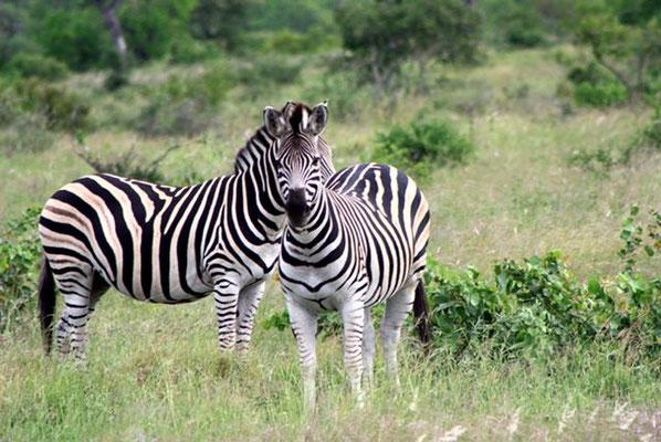 Impressionen aus Süd-Afrika