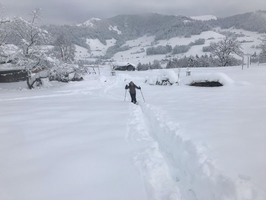Denise Sigg Skitour auf den Bachtel 1115m