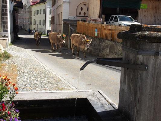 Alpabzug in Ftan