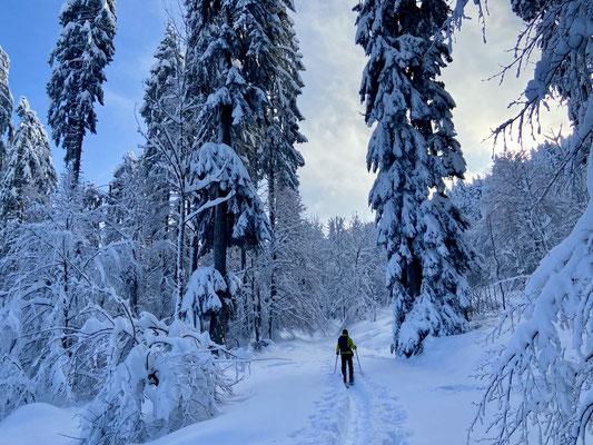 Daniel Fritschi Skitour auf den Bachtel 1115m