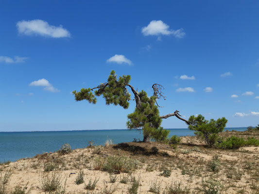 Ly Reiki Yoga Ile d'Oleron - plage de bellevue