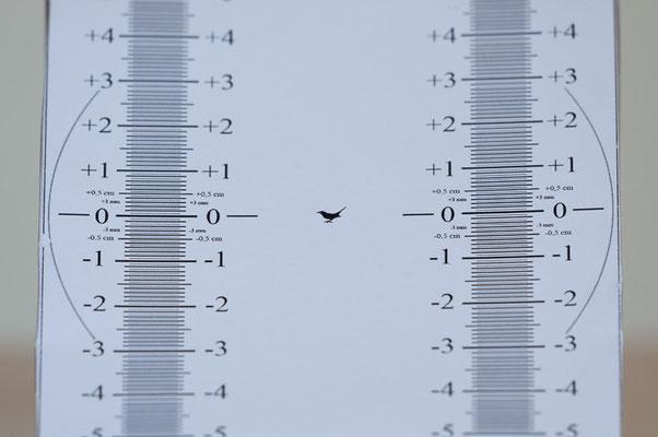 AF-S Nikkor 200-500 mm f/5,6E ED VR + TC-14E II bei 700 mm