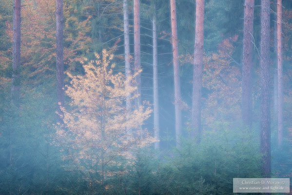 Herbstwald in der Morgendämmerung