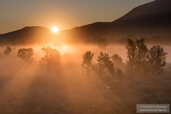 Sonnenaufgang im Morgennebel