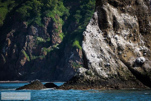 Vögelfelsen in der Awatscha-Bucht