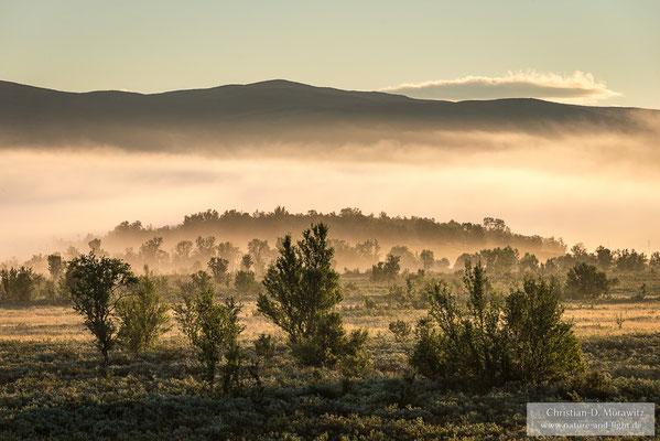 Morgenstimmung über einer Sumpflandschaft