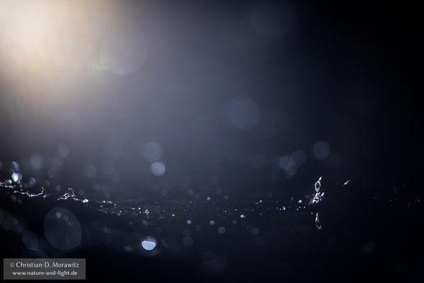Kreuzkröte bei Nacht