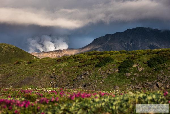 Aus dem Krater des Mutnovsky steigt viel Dampf auf