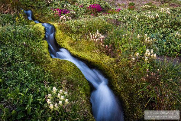 Ein Bach in der Tundra gesäumt von Blumen