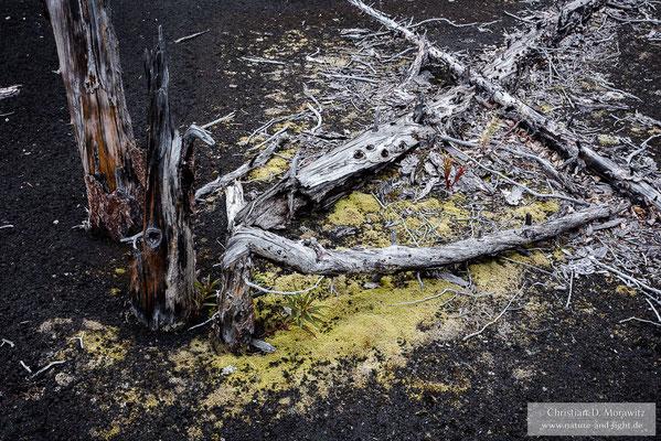 Durch Asche verschütteter toter Wald