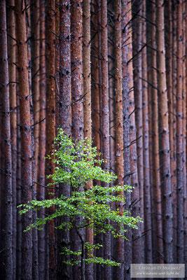 """""""Mono"""", 3. Platz in der Kategorie Pflanzen, Pilze und andere Lebewesen"""