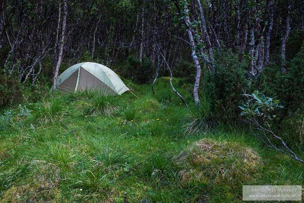 Zeltplatz in einem Birkenwald