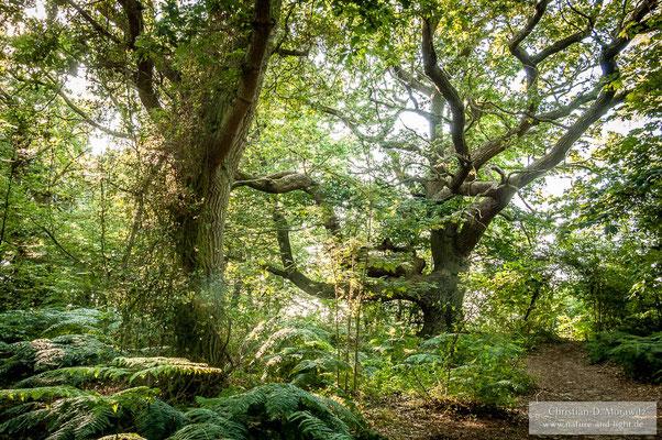 Mitten im wilden Wald