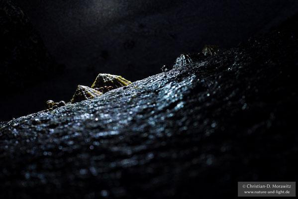 Napfschnecken bei Nacht