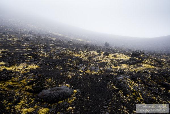 Im Nebel bestiegen wir einen der alten Schlackekegeln vom Ausbruch 1975/1976