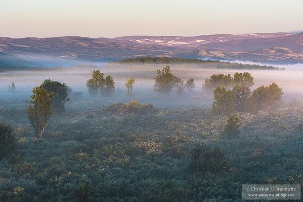 Morgennebel im ersten Licht