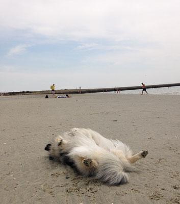 Wolfsspitz Babette am Strand
