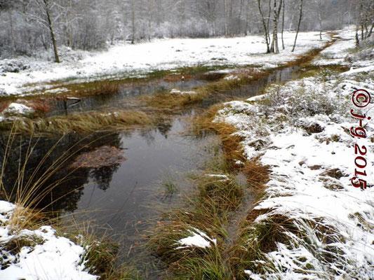 Das Olfener Moor - Wasserstand ist wieder normal (23.11.2015)