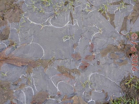 Der Frost als expressionistischer Künstler.