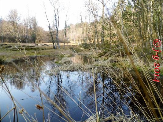 Das Olfener Moor - Wasserstand ist normal (8. März 2014)