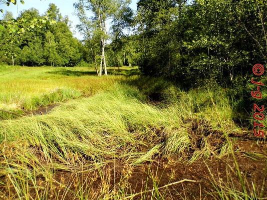 Das Moor ist ausgetrocknet (2. August 2015)